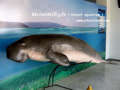 phuket-aquarium04