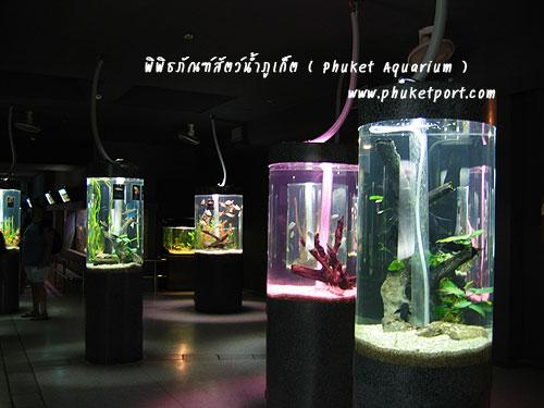 phuket-aquarium05