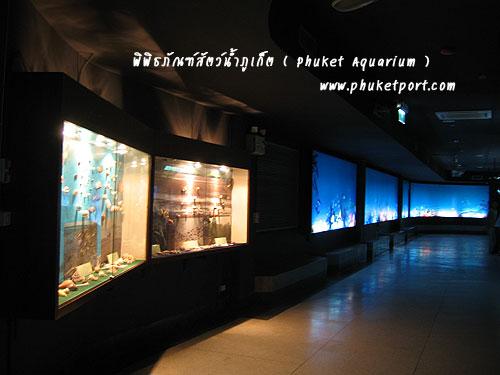 phuket-aquarium06