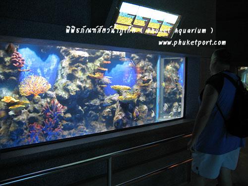 phuket-aquarium07