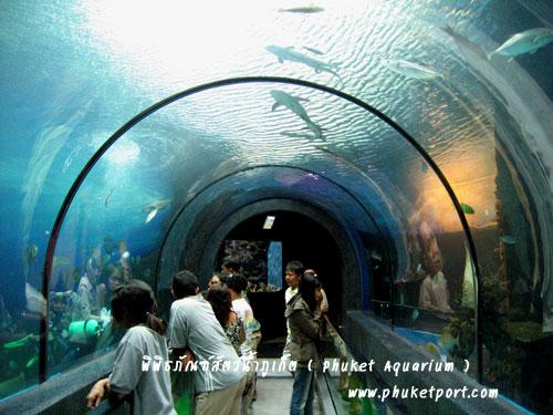 phuket-aquarium08