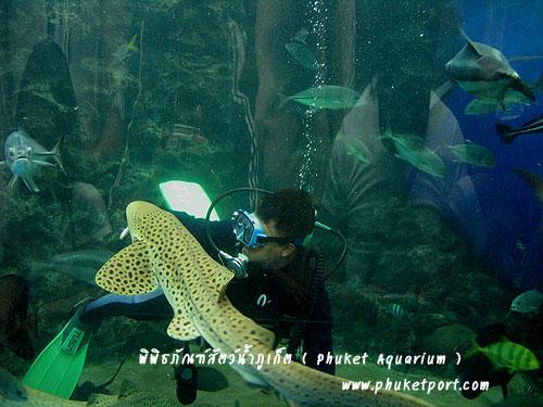 phuket-aquarium09