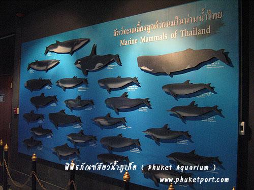 phuket-aquarium10