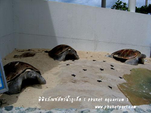 phuket-aquarium11