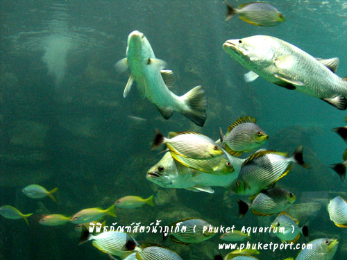 phuket-aquarium12