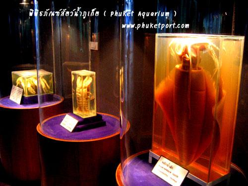 phuket-aquarium13