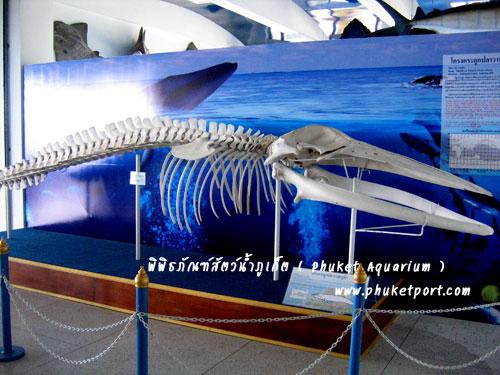 phuket-aquarium14
